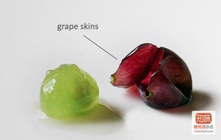即使是红葡萄,也只有葡萄皮是带有颜色的,图片来源:winefolly.com
