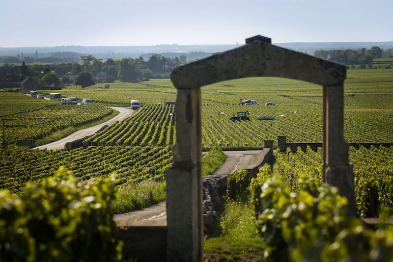 图片来源:vins-france.com