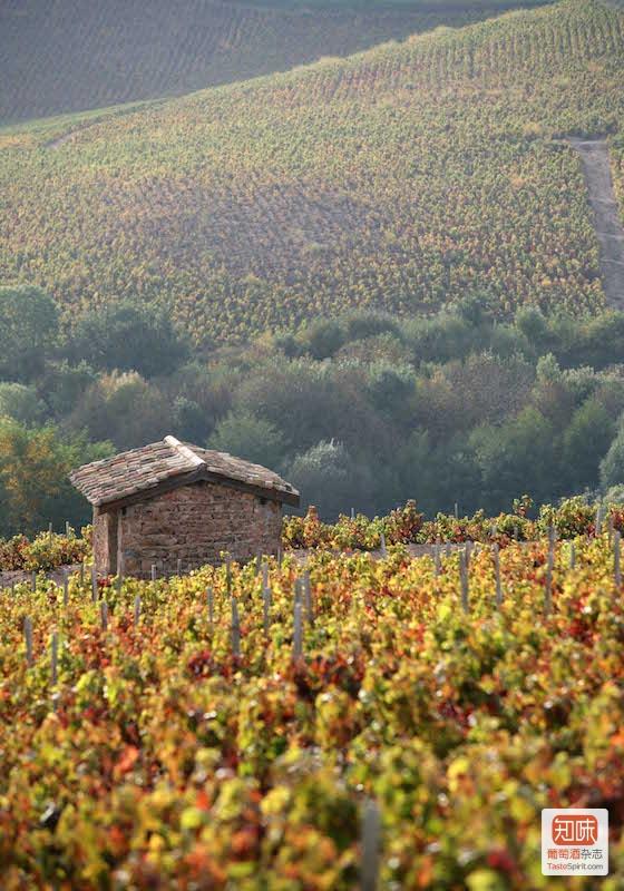博若莱风光,图片来源:www.beaujolais.com