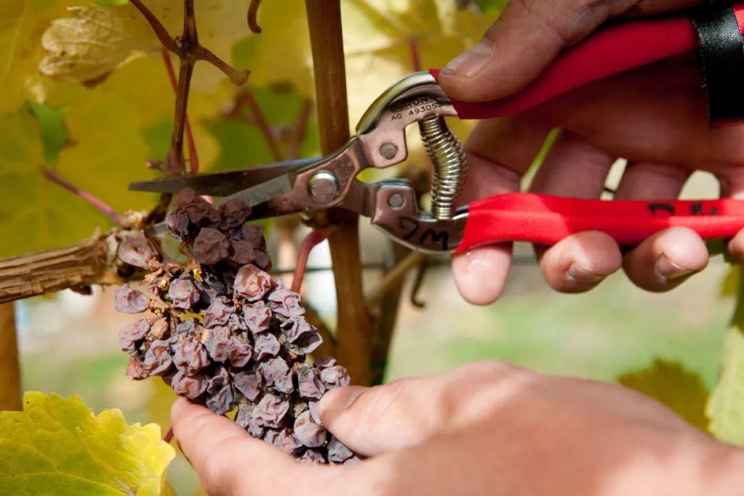 2020世界十大最贵葡萄酒更新了,为什么它们这么贵!?
