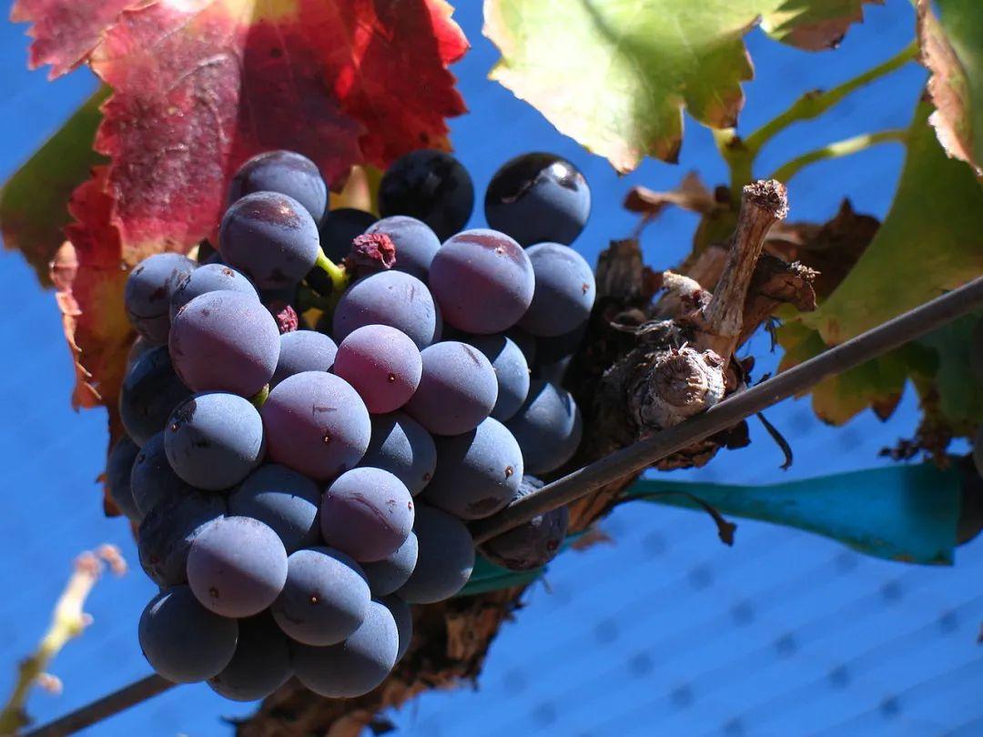 曾火遍世界的西班牙酒现在为何被低估?这篇文章说出了真相