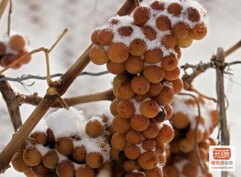 结冰的葡萄,图片来源:winicjatywa.pl