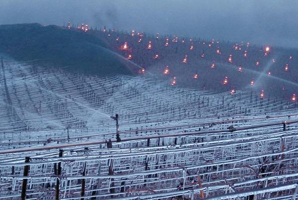 夏布利的春天有时会发生可怕的霜冻,为了挽救葡萄,酒农会在葡萄田里燃起火堆驱除霜冻。图片来源:William Fèvre