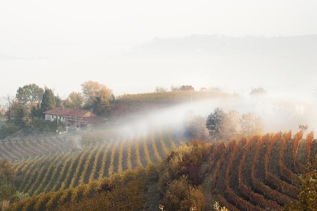 """皮埃蒙特雾气缭绕的山间葡萄园,内比奥罗(Nebbiolo)的雅称""""雾葡萄""""也由此而来,图片来源:Stefano Pertusati"""