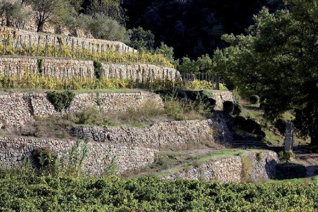 米拉瓦尔酒庄(Château Miraval)山地葡萄园,图片来源:miraval-provence