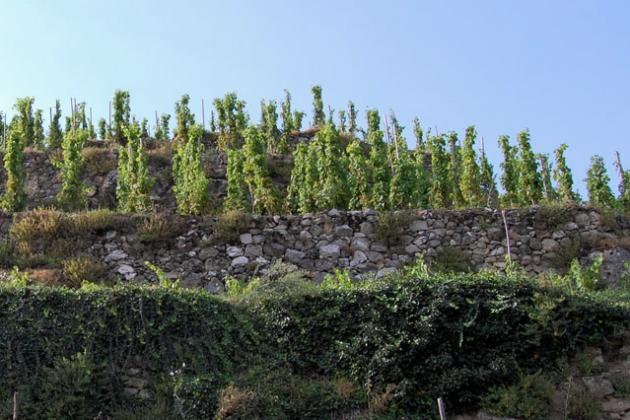 弗朗索瓦(François Villard)的葡萄园,图片来源:pywine
