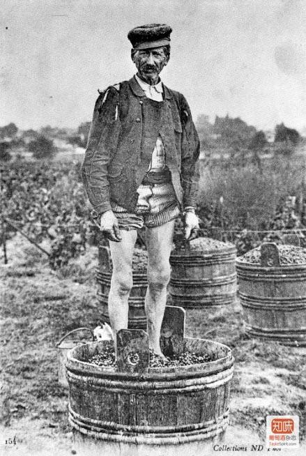 一张罕见的摄于1910年前后的照片,记录下了100多年前法国卢瓦尔河谷Sologne地区的酒农劳作酿酒的场景。到今天一些酒庄还保留着脚踩葡萄破皮的传统。不过真的不光有少女的芳足,还可能会有大叔的汗脚...点击图片查看更多老照片...点击图片查看更多老照片