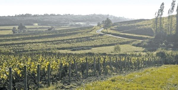 夏隆内丘(Côte Chalonnaise)的酒庄Cave des Vignerons de Buxy的葡萄园,图片来源:DR\Le Figaro