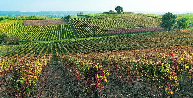 葡萄品种以多样化著称的西南产区,图片来源:Jean-Paul AZAM /hemis.fr