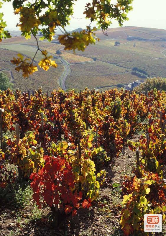 图片来源:www.beaujolais.com