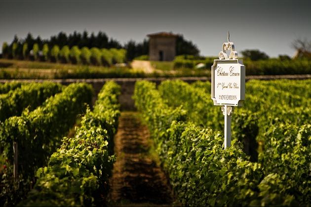 2012年份,以早开花的梅洛 (merlot) 为主要葡萄品种的产区在品质上占得先机,来源:Michael Redfern