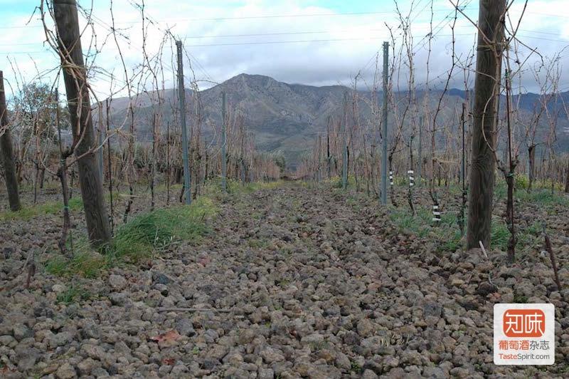 满布火山岩的葡萄园,图片来源:tenutaterrenere.com