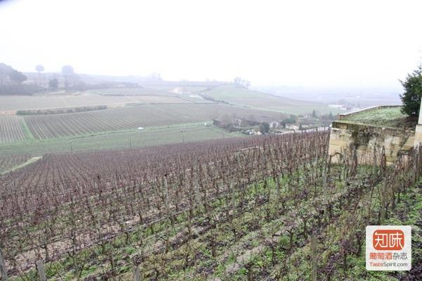 欧颂酒庄(Château Ausone)的葡萄园,在一片东南向的坡地上,顶部有一圈岩石