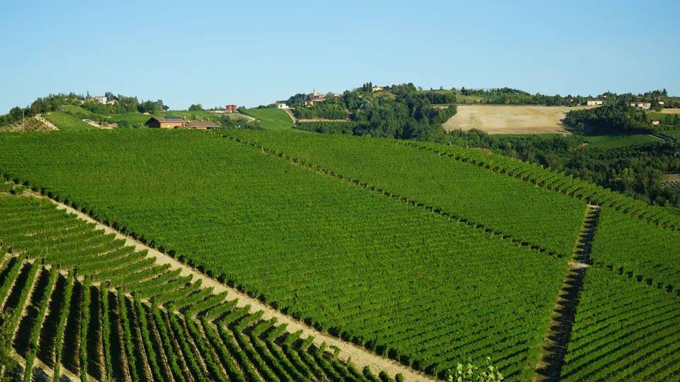 Giacomo Conterno何以成为巴罗洛的至尊酒庄?