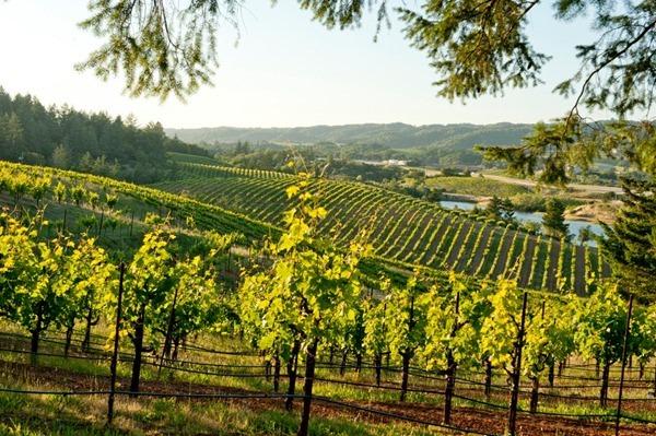 利顿泉酒厂美景 图片来源:Ridge Vineyards