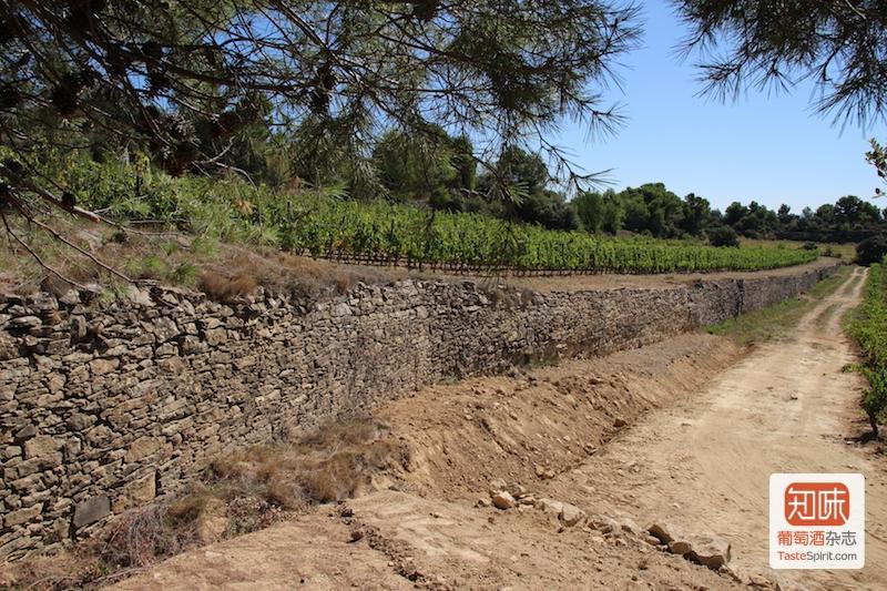 葡萄园的石墙,图片来源:凌子