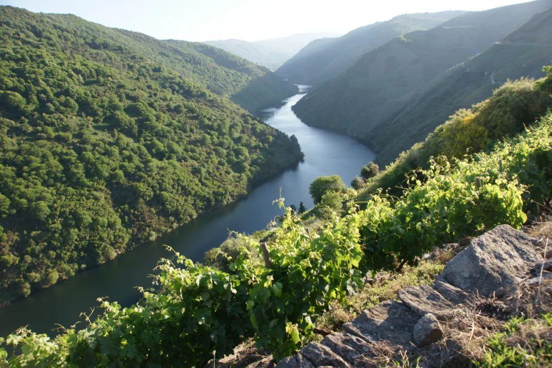 林裕森专栏|这个原产自法国Jura的葡萄品种,却在西班牙大放异彩!