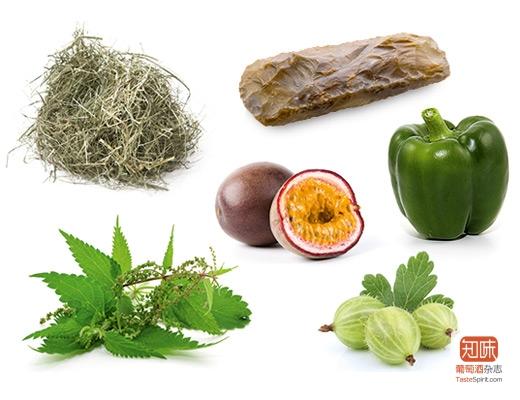 长相思表现出来的一些常见香气,来源:rebsortenlexikon.de