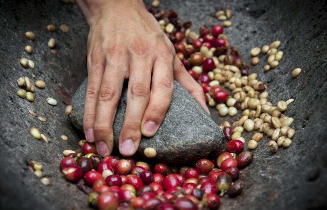 上海 哥伦比亚产区品鉴: 咖啡中的勃艮第,值得你一探究竟!