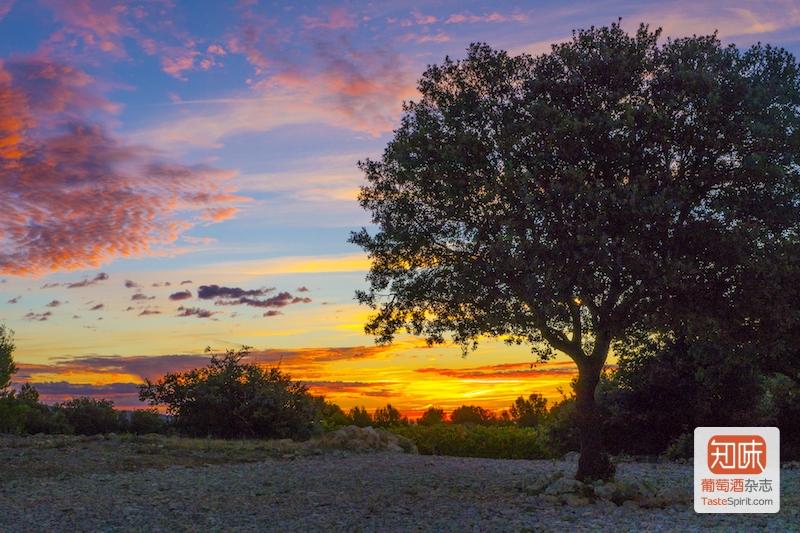 朗格多克的日落,图片来源:Gerard Bertrand