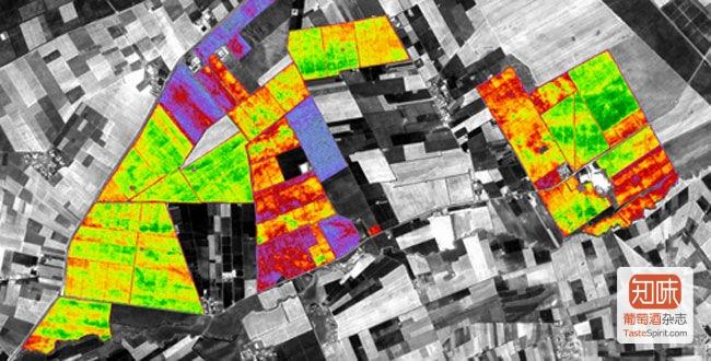 Oenoview拍摄的葡萄园红外图,可以借此了解不同区块的生长状况