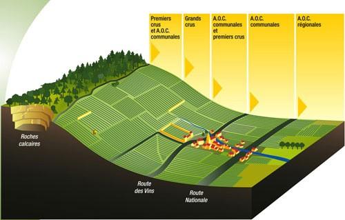 勃艮第,特级园经常分布在半山腰,光照排水最佳的位置