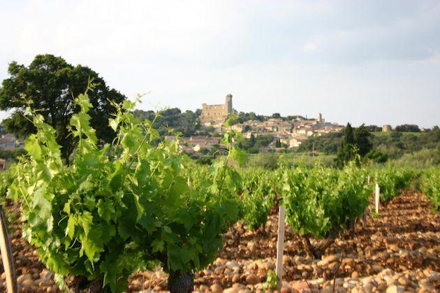 玛古酒庄(Domaine de Marcoux)的葡萄园,图片来源:thewinecellarinsider