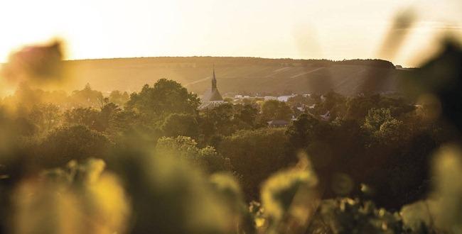 勃艮第年份指南:2012,红酒质优量少