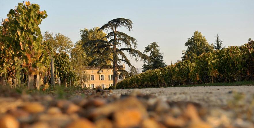 尚福酒庄 Chateau Jean-Faure,来源:Chateau Jean-Faure
