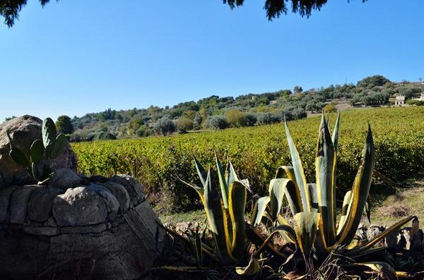 意大利最南端的西西里岛:仙人掌与葡萄藤共存的土地,来源:陈微然