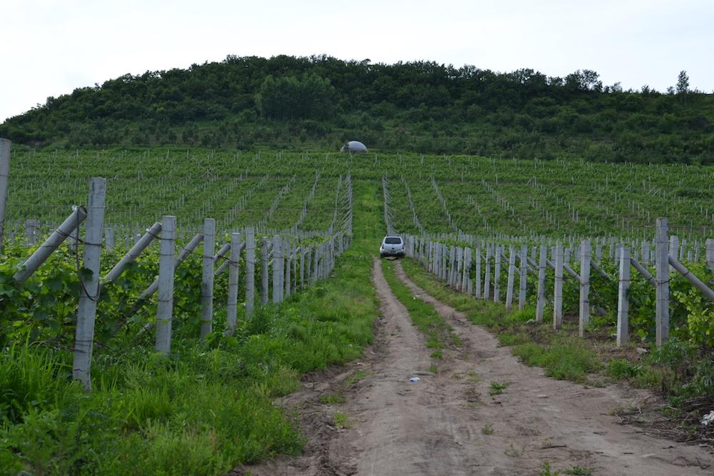 近40公顷的太阳升葡萄园,山顶圆形的装置为蓄水器
