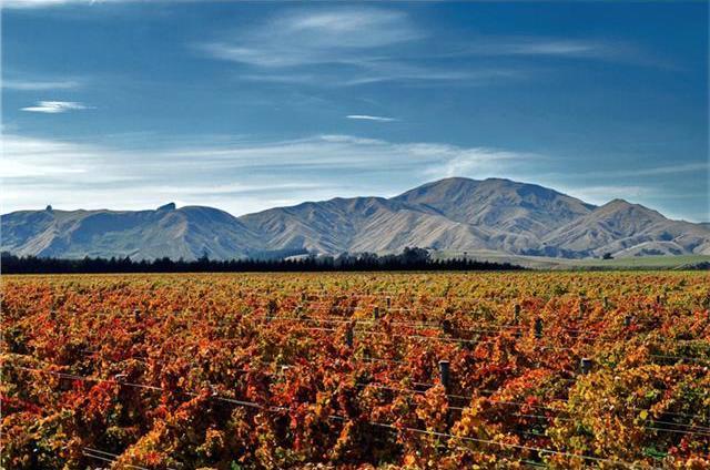 酒庄的葡萄园,图片来源:crackawines.com.au