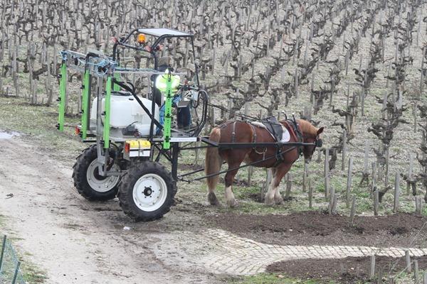 宝得根庄园(Château Pontet-Canet)使用马在葡萄田里施用天然成分的药剂
