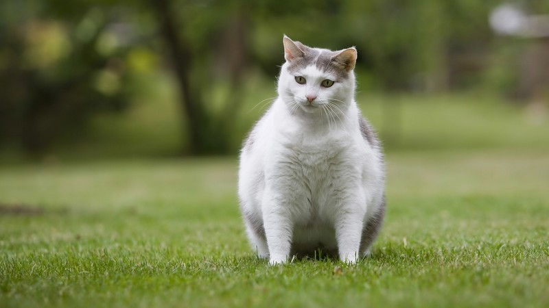Is-My-Pet-Overweight-1920x1080