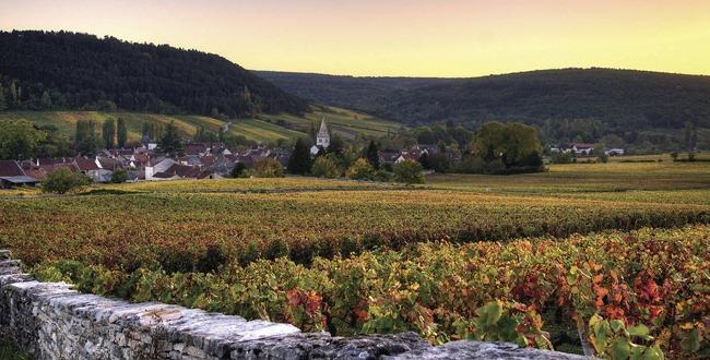 勃艮第年份指南:2010红酒绝佳,方正严谨