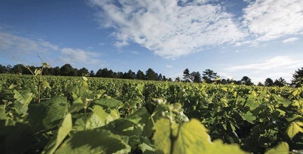 Paysage-de-Bourgogne-BIVB-IBANEZ-A_thumb.jpg