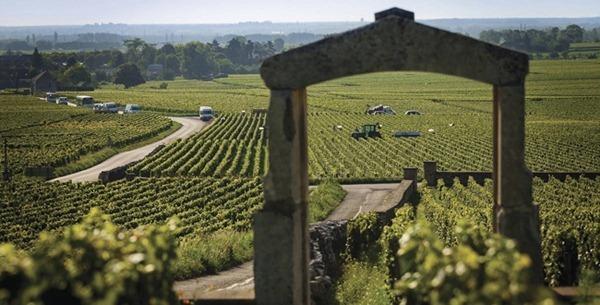 普利尼蒙哈榭(Puligny-Montrachet)的葡萄园,来源:BIVB/IBANEZ A.