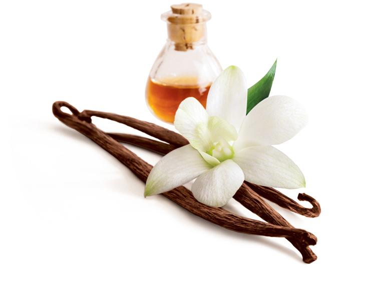香草的花朵和果实,香草醛主要存在于在香草的果实之中