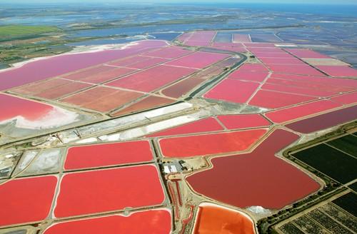 法国南部卡马格(Camargue)的盐场,水的颜色非常神奇地呈现为玫瑰色
