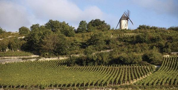 桑特内(Santenay)的葡萄园,来源:BIVB/JOLY M.
