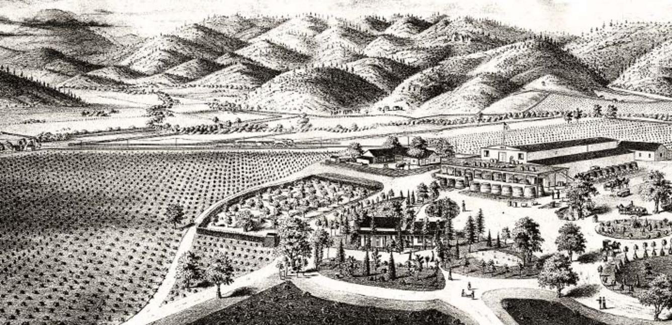 19世纪关于Charles Krug酒庄的素描