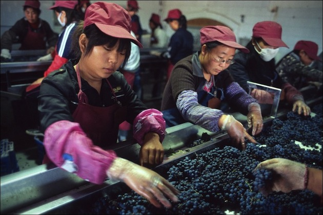 山西一家酒庄的葡萄分拣台,图片来源:BBC