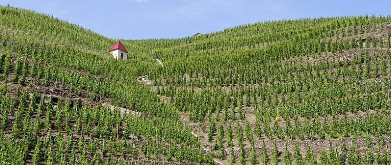图片来源:rhone-wines