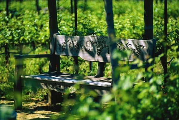 图片来源:Provence Wine