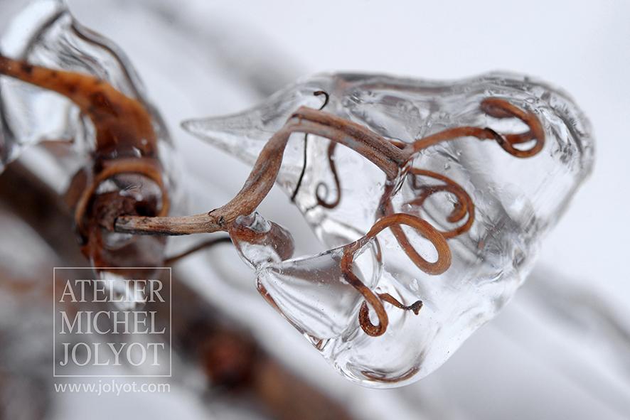 香槟严冬寒冻的葡萄藤蔓,图片来源:Michel Jolyot