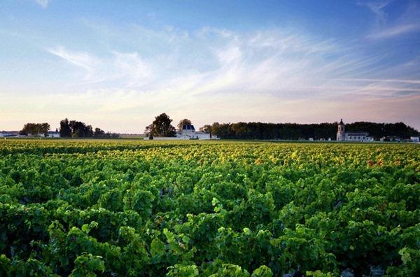 波尔多的葡萄园Viticole Bordeaux