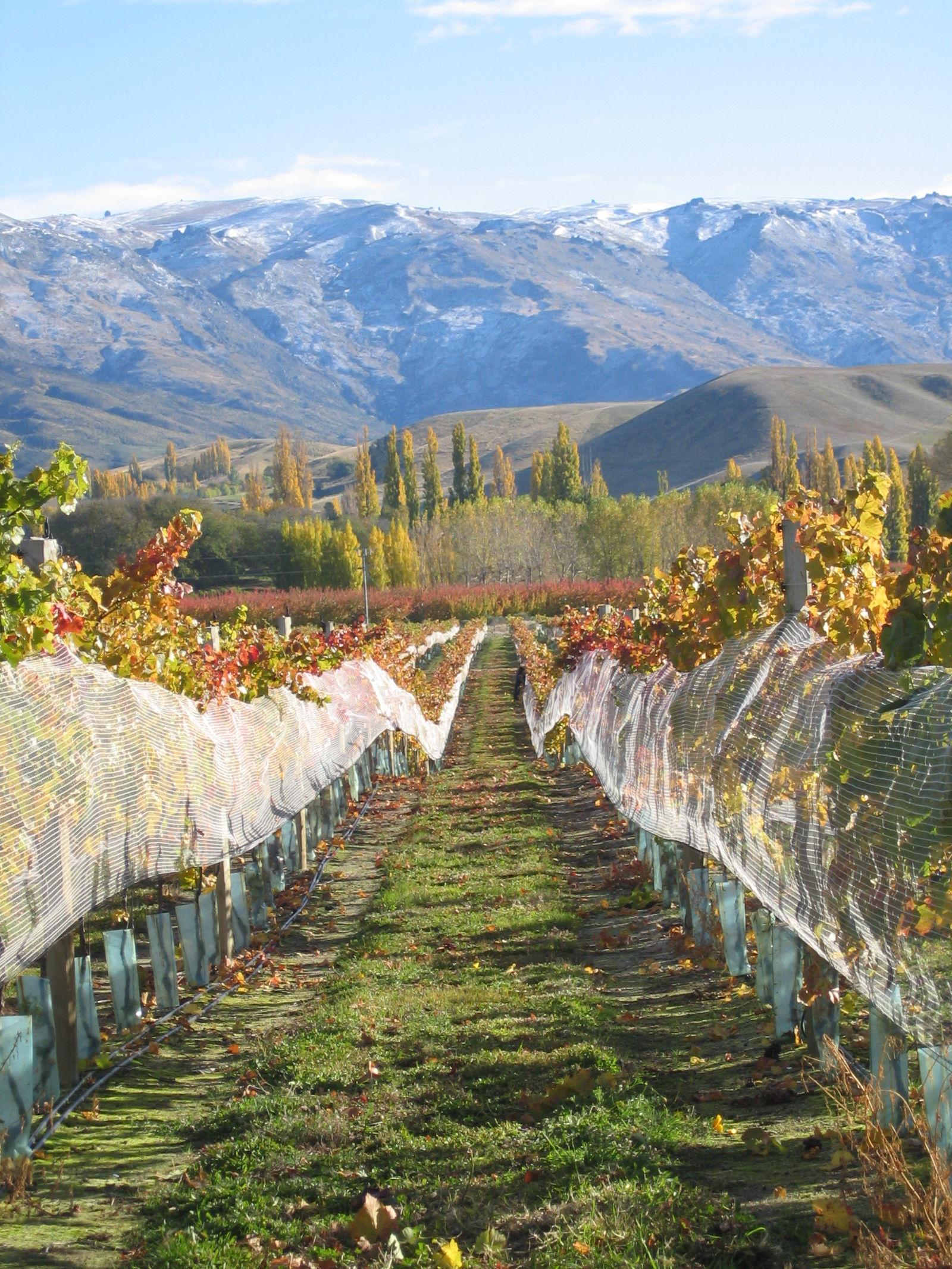 新西兰葡萄酒所有的产区,品种与名庄,都在这里了!