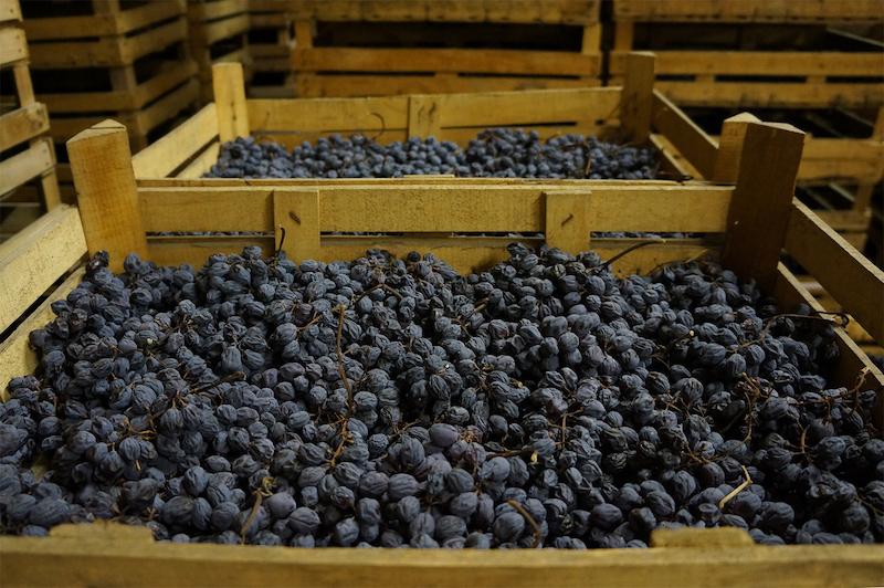 酿制Amarone用的风干葡萄