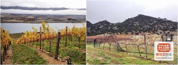酒庄风土优越的葡萄园(左),以及8株生长在金币上的葡萄藤(右),图片来源:施晔