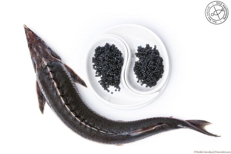 鲟鱼和鲟鱼子,图片来源:pinterest.com